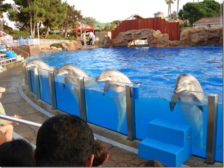 Iffa Nasir - dauphins captifs faisant des courbettes (Sea World de San Diego)