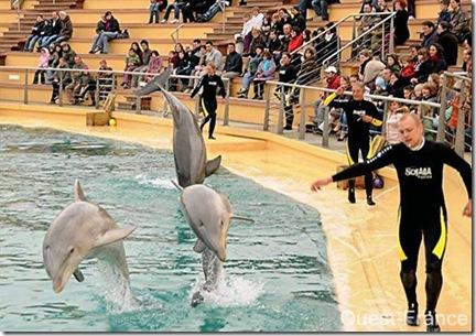 Le delphinarium de Planète Sauvage. Photo - Ouest France