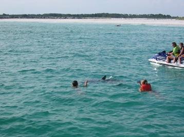 Touristes avec des dauphins à Panama Beach City