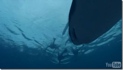 BBC Natural World - Saved By Dolphins (Vidéo)
