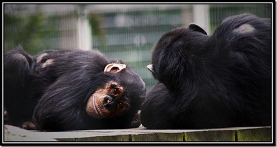 Grands singes, dauphins et éléphants ont réussi le test du miroir - Photo de paulmcdee