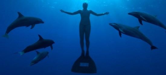 L'Opération pour les dauphins d'Antibes : un tournant pour La Dolphin Connection !