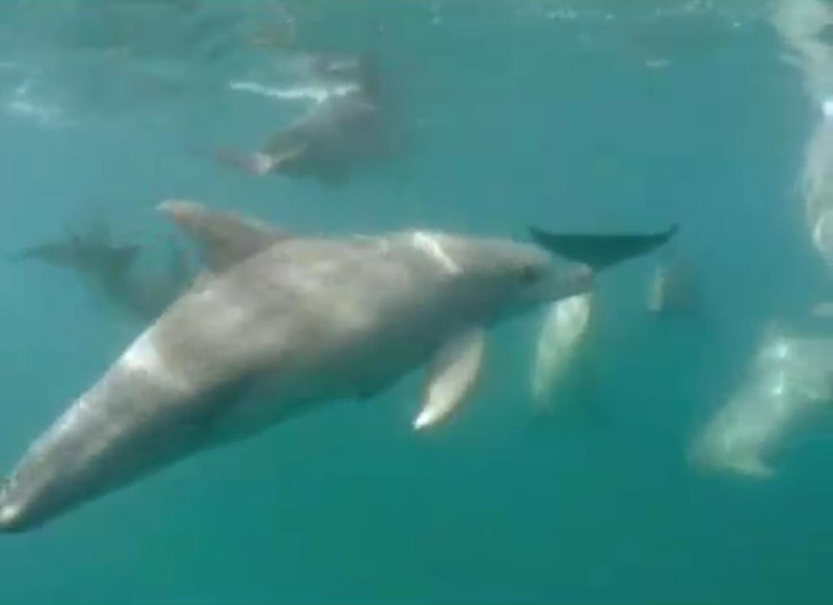 Documentaire - Dauphins, Les Danseurs de l'Océan - National Geographic