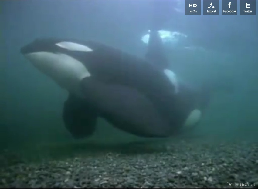 Documentaire : Orques, Prédateurs des Mers - National Geographic