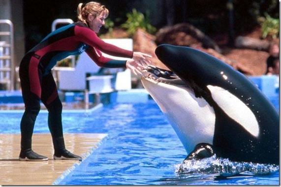 La dresseuse Dawn Brancheau et l'orque Tilikum en plein spectacle au SeaWorld d'Orlando - Photo 20 minutes