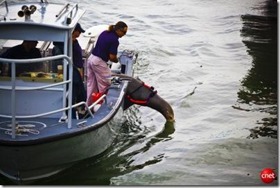 Otarie.US.Navy.Photo-Cnet
