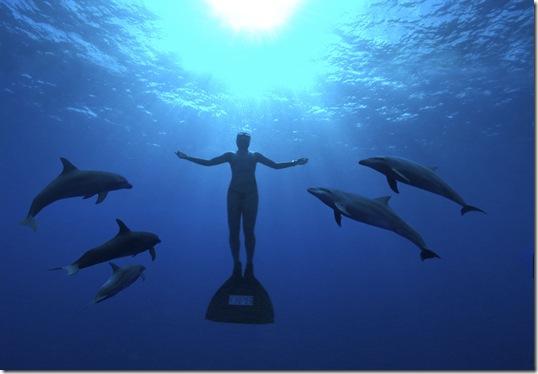 Agir pour faire cesser le massacre des dauphins des Japon