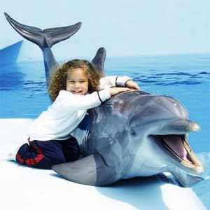 Yaku et Wayra, les deux dauphins de l'hôtel Los Delfines à Lima, Pérou