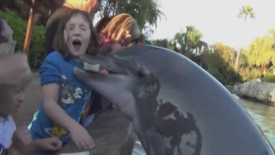 Un dauphin mordant la main d'une enfant dans un delphinarium