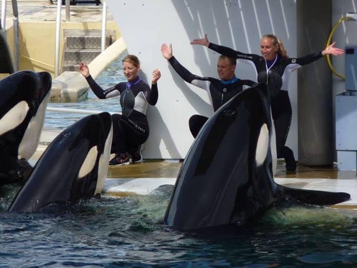 france-antibes-orca-2014-I