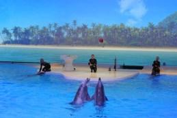 suede-dauphins2
