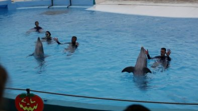 malte-swim-with-dolphins2