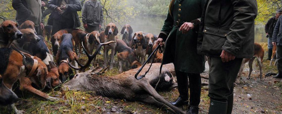 À propos de la chasse (à courre)