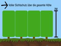 Wie gro muss der Pflanzabstand bei Heckenpflanzen sein?