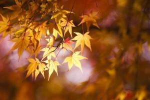 福岡 写真家Tatsuya Fukuda 風景写真 紅葉の写真 イベント撮影 ロケ撮 0358