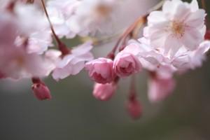 福岡 卒業式の撮影 ブライダル撮影 ウエディングアルバム 結婚準備 ロケ撮 前撮り 0358