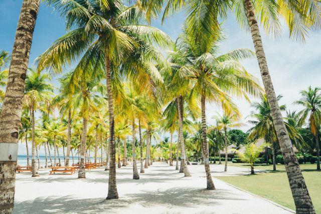 Beautiful palm trees around the beach