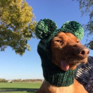 Pet rescue Walleye outside on a sunny day wearing a green knit hood with his tongue sticking out
