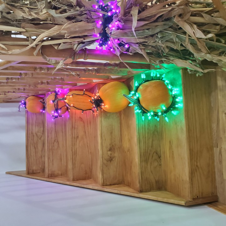 Corn stalk wrapped in a purple C6 LED light string at the bottom of stairs lined with five pumpkins wrapped in green, orange and purple lights as a decorating tip for Halloween