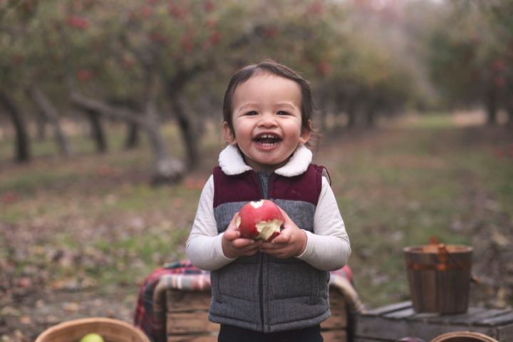 Toddler boy standing in an apple orchard eating an apple and smiling