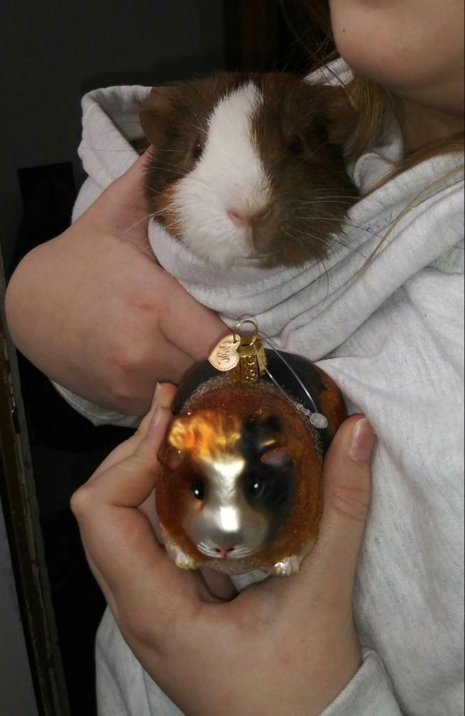 Pet Guinea Pig with matching Christmas ornament from Bronner's.