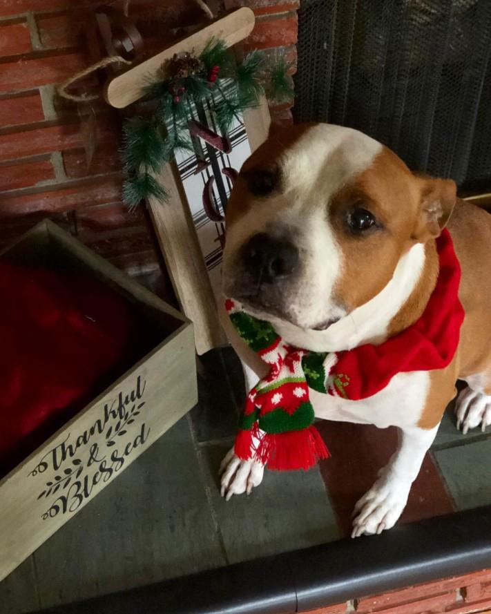 Dog wearing Bronner's Nordic pet scarf