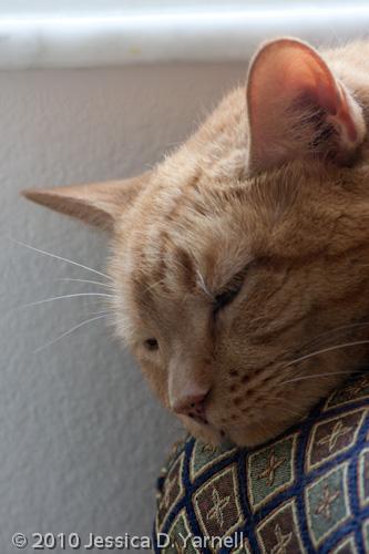 Sleepy Goldy
