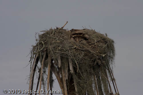 Osprey nest abandoned