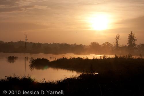 Wading Bird Way sunrise