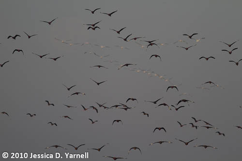 Skies Filled with Birds