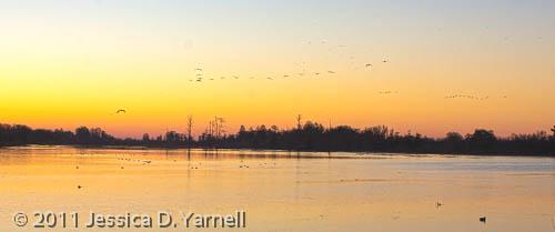 Sunrise over the Marsh (HDR)