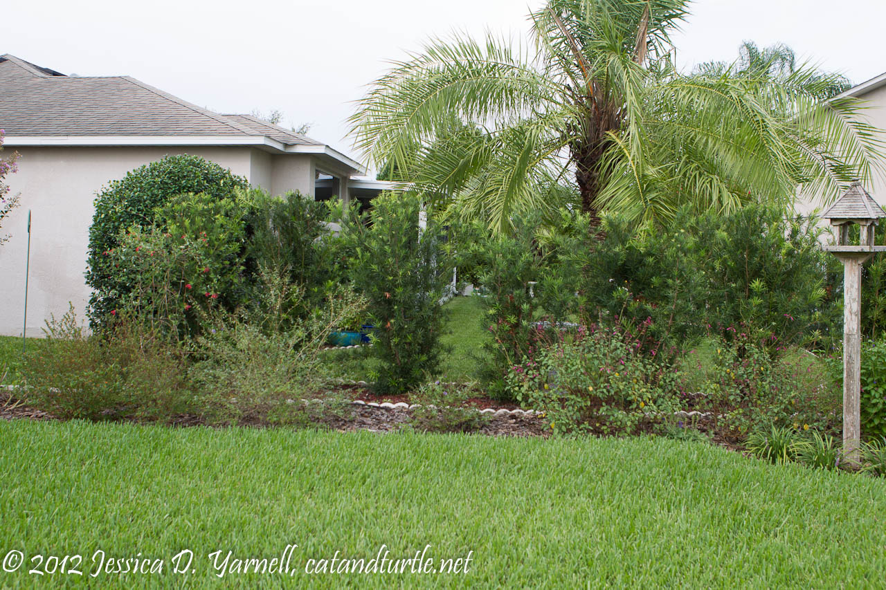 gardening for the birds catandturtle