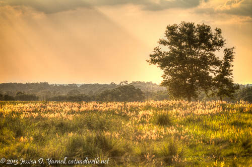 Afternoon Light on a Grassy Field_Lake County