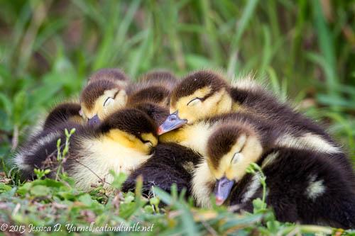 All Cuddled Up Together