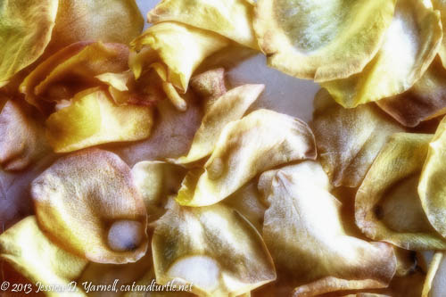 Golden Petals