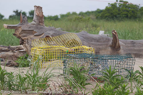 Piping Plover Nesting Cages