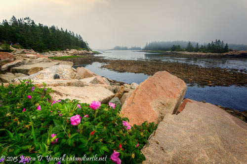 Schoodic Peninsula, Acadia National Park