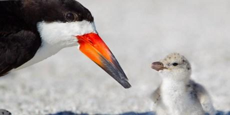 Mommy, When Will My Beak Grow?