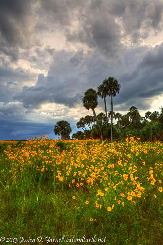Lake Jesup Wildflowers