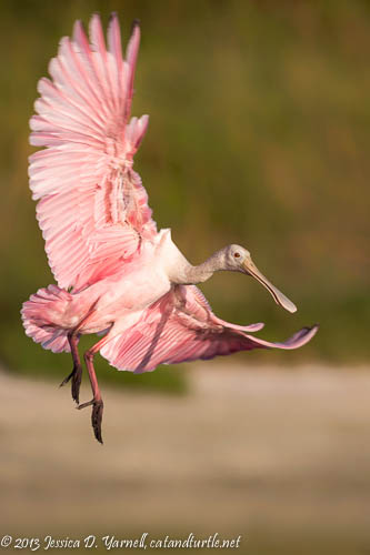Pink Fly-In