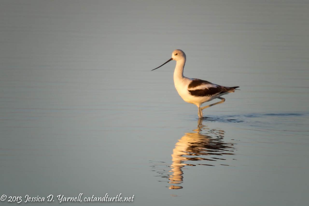 lakeland christmas bird count 2013 i found pelicans catandturtle