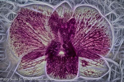 Frozen Orchid