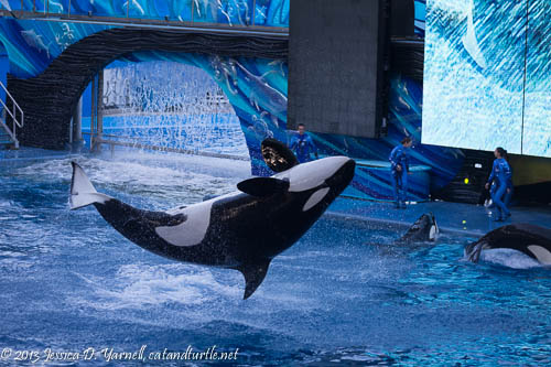 Shamu Splash_Sea World Orlando_201312066_copyrightJessYarnell