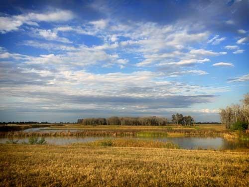 Lake Hancock Outfall Wetlands