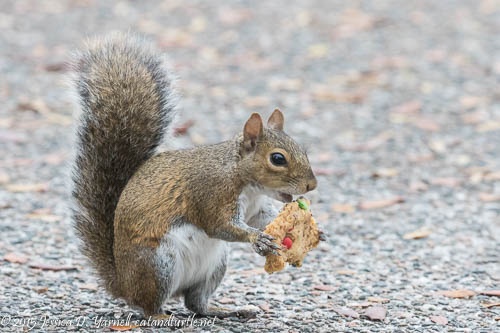 Squirrel with a Sweet Tooth
