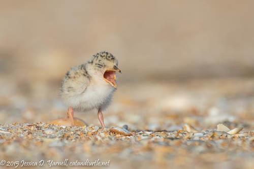 Cute Yawn!