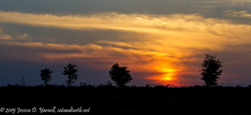 Sunset Through the Trees (April)