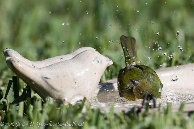 Greenie Bathtime