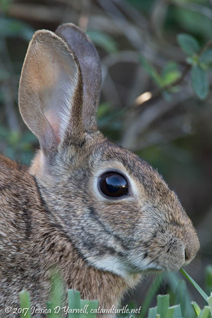 Bunny's Eye View!