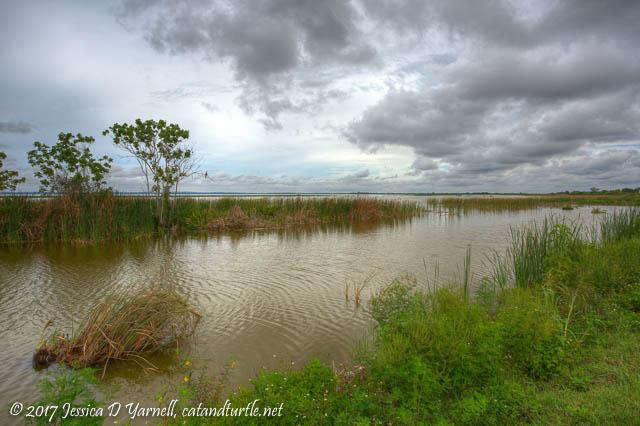 Shore of Lake Apopka